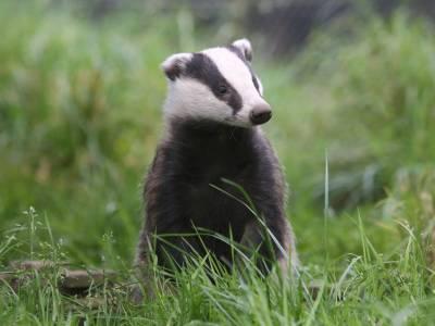 badger-rx