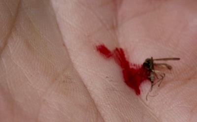 3584_mosquito_kill_macro