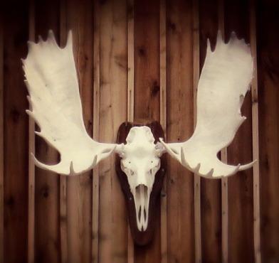 Go_Untamed_Winston_Wolfrider_Canada_Dempster_Highway_Skull