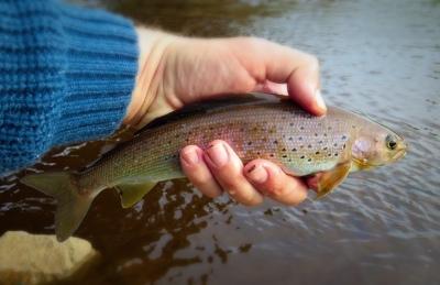Go_Untamed_Winston_Wolfrider_Alaska_trout