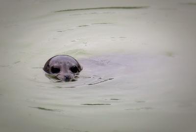 Go_Untamed_Winston_Wolfrider_Alaska_Skagway_Seal