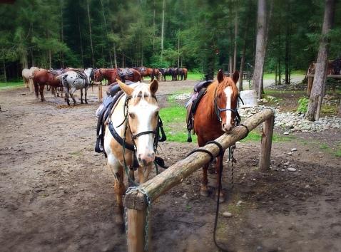 horses, river, storm