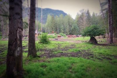 Go_Untamed_Winston_Wolfrider_Alaska_Skagway_horses