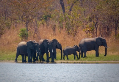Malawi-GoUntamed-elephants