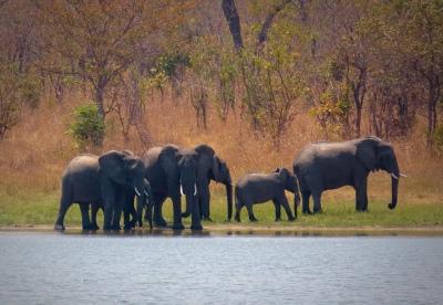 Malawi-GoUntamed-elephants