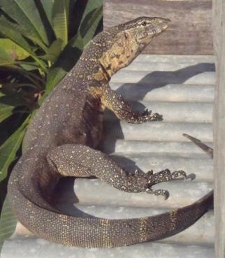 Go_Untamed_winstonwolfrider_lizard