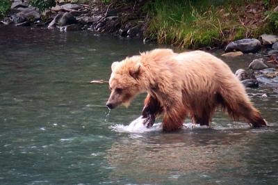 Go_Untamed_Winston_Wolfrider_Alaska_Bear