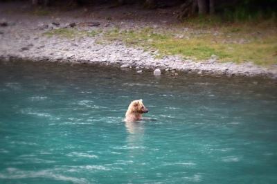 Go_Untamed_Winston_Wolfrider_Alaska_Bear_River