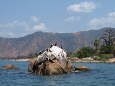 GoUntamed_Malawi_Lake_cormorant