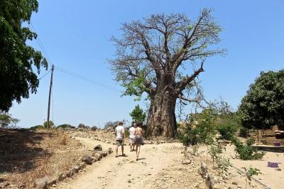 GoUntamed_Malawi_Chizamulu_Baobab